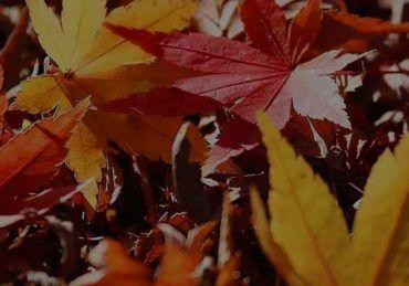 توصیف پاییز در زبان انگلیسی